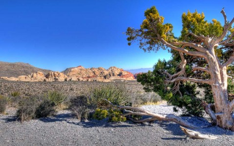 Red Rock Canyon, Nevada Desert